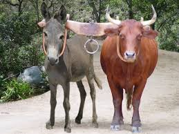 The Ox & The Donkey